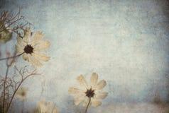 Avbildar blom- bakgrund för Grunge med utrymme för text eller Royaltyfri Bild