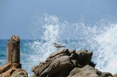 avbrott av pipblåsare vaggar sandwaves Arkivbild