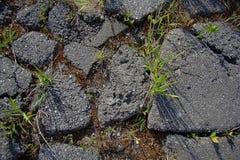 Avbrott för grönt gräs till och med stycken av asfalt Arkivfoto