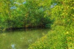 avbrottsranddagen reflekterade trä för surface vatten för sommaren för floden slätt royaltyfri bild