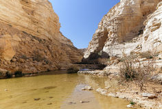 Avdat Canyon Stock Photo
