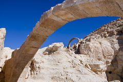 Avdat National Park. Avdat placed in the Negev highlands at the edge of Avdat plateau - Israel Royalty Free Stock Photo