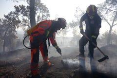 avdelningen släcker brandskogen fotografering för bildbyråer