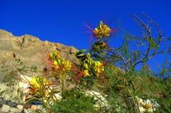 Ave del paraíso en Kamari, Santorini Fotografía de archivo