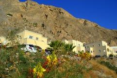 Ave del paraíso y montaña de Messa Vouno, Santorini Foto de archivo