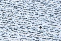 Ave marinho claras Fotos de Stock