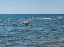 A ave marinho em seu elemento aprecia a vida fotografia de stock