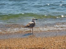 A ave marinho em seu elemento aprecia a vida fotos de stock