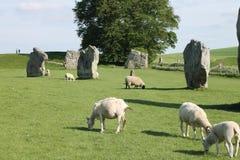 Avebury常设石头和绵羊 免版税图库摄影
