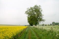 Avebury fält Royaltyfria Foton