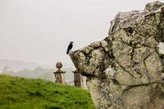 Avebury Henge Wiltshire Zlany Kindom obraz royalty free