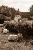 Avebury, Neolithic henge monument, UNESCO World Heritage site, Wiltshire, southwest England. ENGLAND, AVEBURY - 03 OCT 2015: Avebury, Neolithic henge monument Stock Images