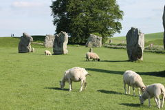 Avebury standing stones and sheep. Standing stones, part of the Neolithic (New Stone Age) stone circle of Avebury, in Wiltshire, England, a World Heritage Site Royalty Free Stock Photography