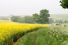 Avebury Wiltshire UK fält Arkivfoto