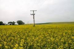 Avebury Wiltshire UK fält Royaltyfria Foton