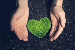 Avec l'amour et le soin à notre nature Photo libre de droits