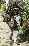 Avec le bois de chauffage transportant l'homme indien guatémaltèque photos stock
