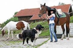 Avec les chevaux et le crabot Image stock