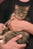 Avec un chat rayé gris Photos libres de droits