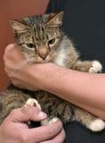 Avec un chat rayé gris Image libre de droits