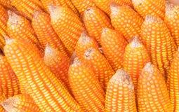 Aveia em flocos e sementes do milho Foto de Stock Royalty Free