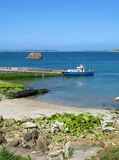 Aveia no quay do St. Agnes, ilhas de Scilly. Foto de Stock