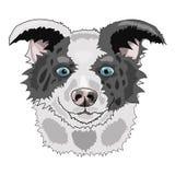 Avel border collie för illustration för hundframsidavektor royaltyfri illustrationer
