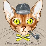 Avel för röd katt för vektortecknad filmhipster Abyssinian Arkivfoton