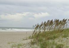 Avena alta del mare sulle dune di sabbia Fotografie Stock
