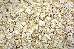Avena antiquata Immagine Stock