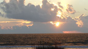 Avena #7 del mar Fotos de archivo libres de regalías