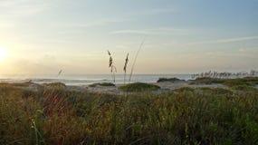 Avena del mar en el amanecer Foto de archivo libre de regalías