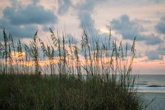 Avena del mar en la playa en la salida del sol Fotos de archivo libres de regalías