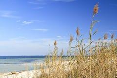 Avena e cielo blu del mare Fotografie Stock