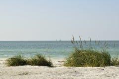 Avena ed erba del mare su una duna di sabbia Fotografie Stock
