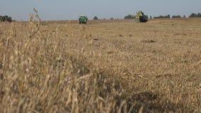 Avena madura y cosecha mecanizada que descargan el grano en el remolque Cambio del foco 4K metrajes