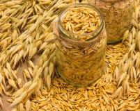Avena y harina de avena del grano en lona Imagen de archivo libre de regalías