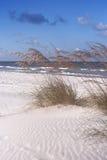 Avena y resaca del mar Imagen de archivo libre de regalías