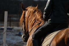 Avenas mondadas de un caballo Foto de archivo libre de regalías