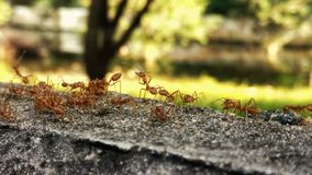 Avengers assemble. Ants can live together in a solidarity and forget themselves in the community Stock Photo