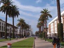 avenida Árvore-alinhada em Marrocos Foto de Stock Royalty Free