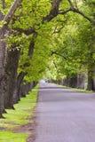 Avenida 01 do carvalho Foto de Stock Royalty Free