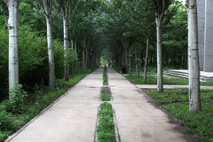 Avenida Imagem de Stock