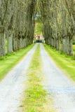 avenida fotos de stock royalty free