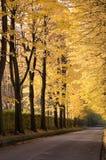 Avenida alineada árbol Fotos de archivo libres de regalías