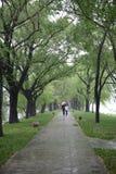 Avenida após a chuva de mola fotografia de stock