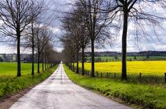 Avenida através dos campos da colza Imagem de Stock Royalty Free
