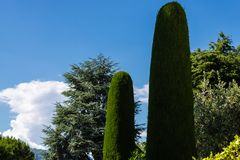 Avenida bonita do cipreste cercada por outras árvores com o fundo do céu azul imagem de stock royalty free