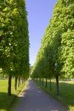 Avenida com as árvores verdes grandes Imagem de Stock Royalty Free