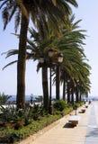 Avenida com palmeiras Fotografia de Stock